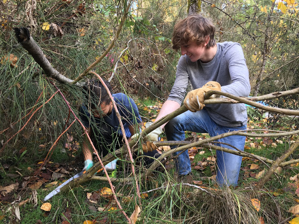 Two volunteers work to saw and remove scotch broom during the November work party.